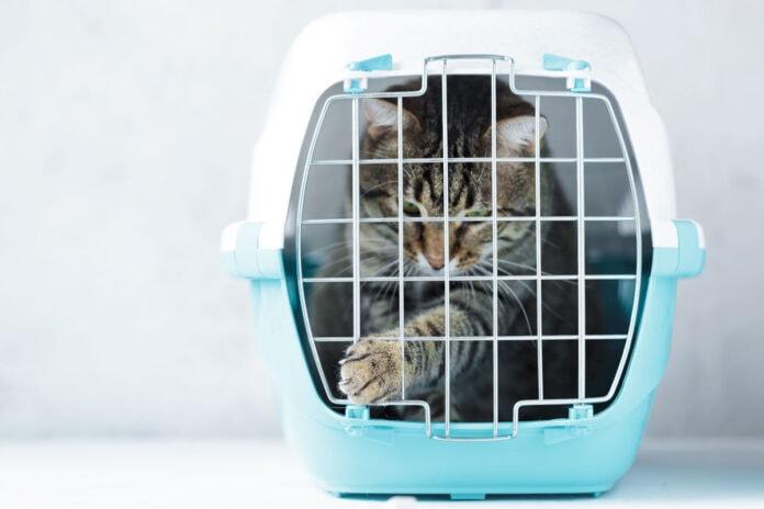 Como viajar com seu animal de estimação de forma segura; gato rajado dentro de caixa de transporte com grades