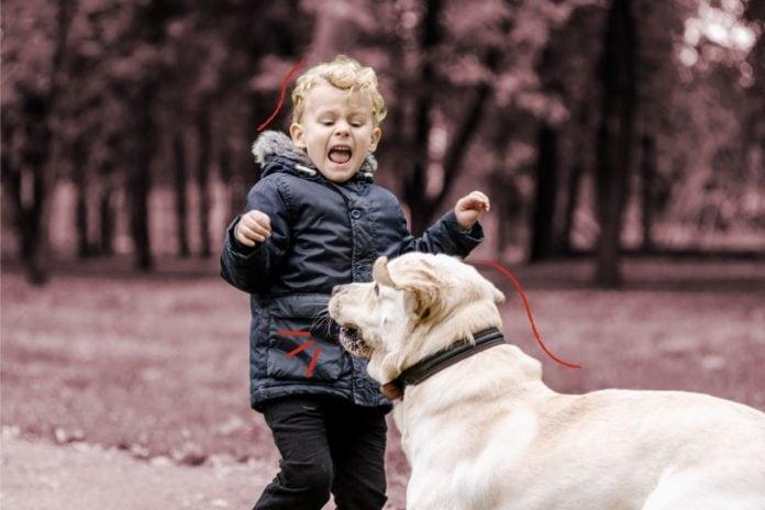 O que fazer quando a criança é mordida por um cachorro?; criança assustada gritando para um cachorro