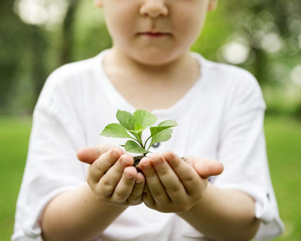 Para pais e educadores: curso TiNis visa nutrir vínculo da criança com a natureza